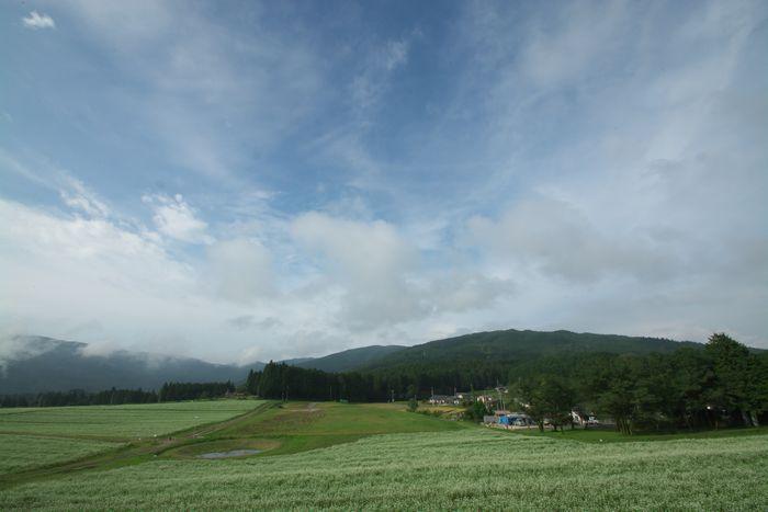 2016-9-6-1そば畑