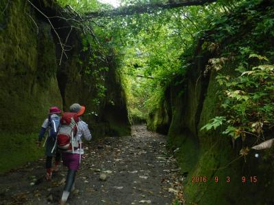 ブログ苔の回廊