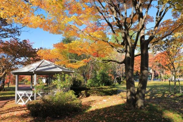 松本歯科大学の庭
