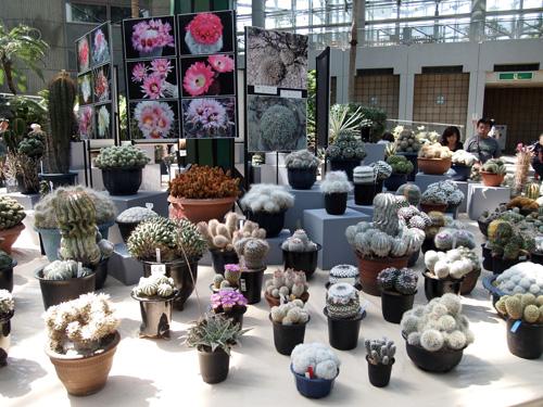 この花館展示1
