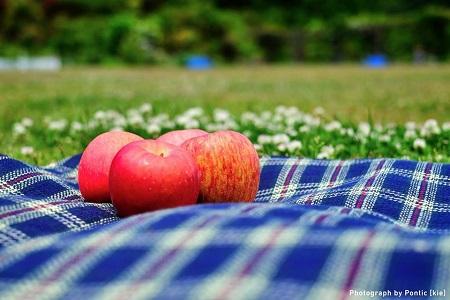picnic-kie6.jpg