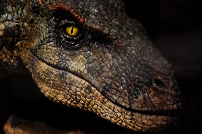 USJ 15th ジュラシック アウトフィッターズ 恐竜 201605