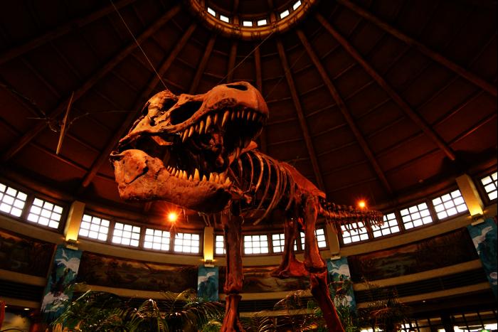 USJ 15th ディスカバリー・レストラン ティラノサウルス骨格 201605
