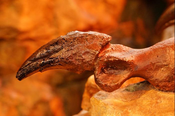 USJ 15th ディスカバリー・レストラン ティラノサウルス爪 骨 201605