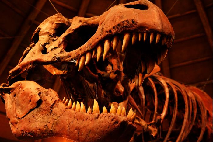 USJ 15th ディスカバリー・レストラン ティラノサウルス頭骨 201605