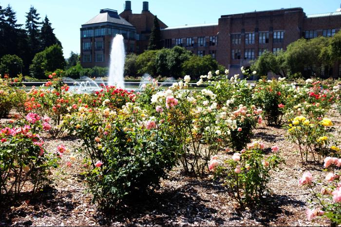 シアトル ワシントン大学 キャンパス 噴水周り 2 201608