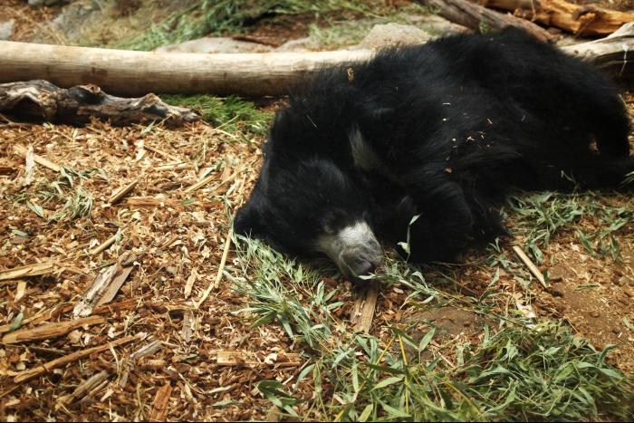 シアトル ウッドランドパーク動物園 クマ 201608