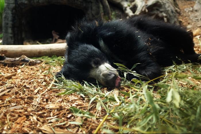 シアトル ウッドランドパーク動物園 クマ 2 201608