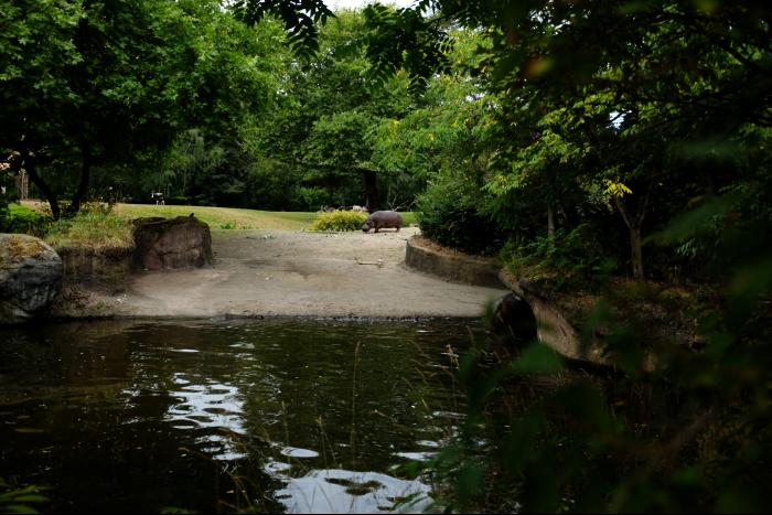 シアトル ウッドランドパーク動物園 サバンナ カバ 201608