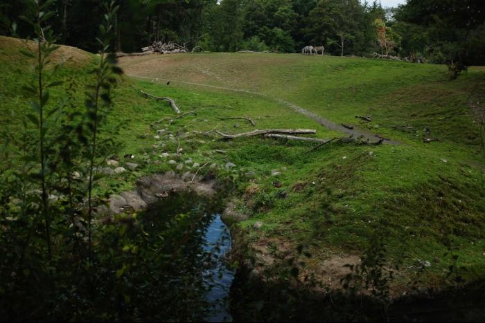 シアトル ウッドランドパーク動物園 サバンナ シマウマ 201608