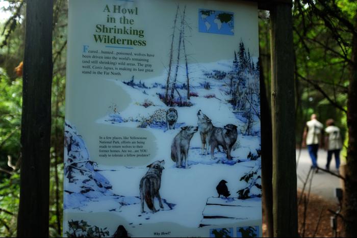 シアトル ウッドランドパーク動物園 タイガ 狼 看板  201608