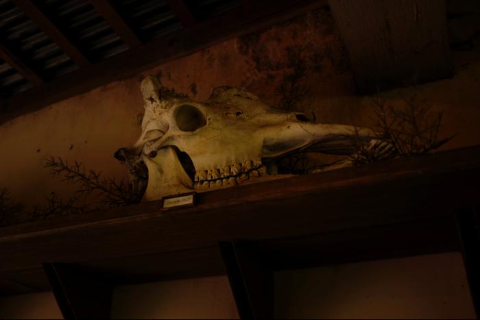 シアトル ウッドランドパーク動物園 サバンナ シマウマ 骨 201608