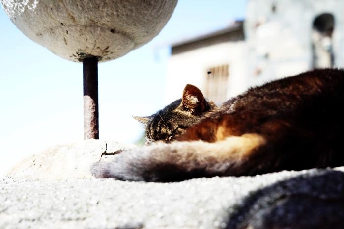 イタリア チンクエテッレ ヴェルナッツァ 猫 3 201603