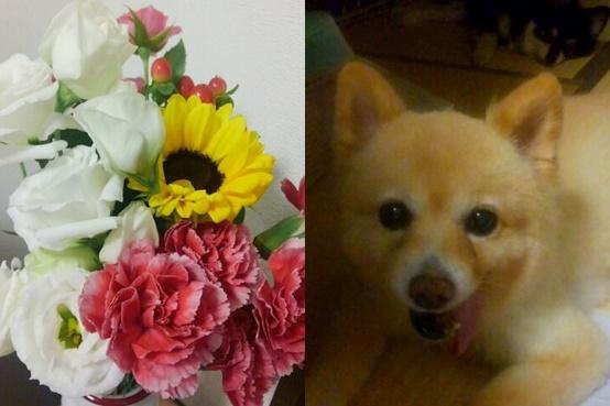 flower1609-horz.jpg