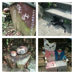 (10)猫の細道