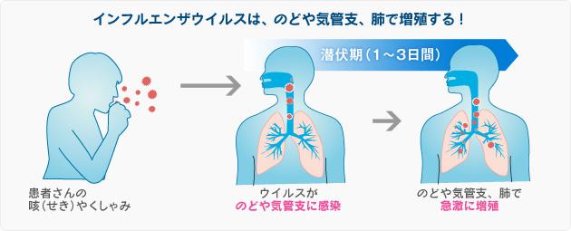 インフルエンザ増殖3-2