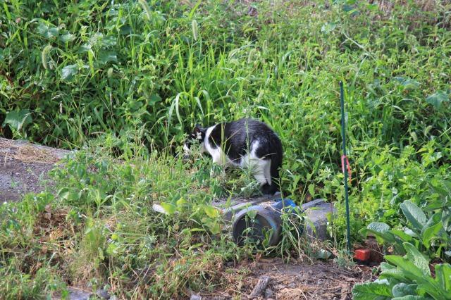 外猫観察2:ハッチ