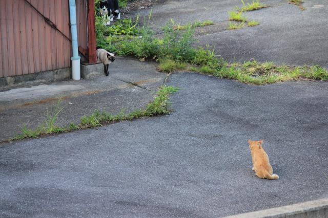 外猫観察4