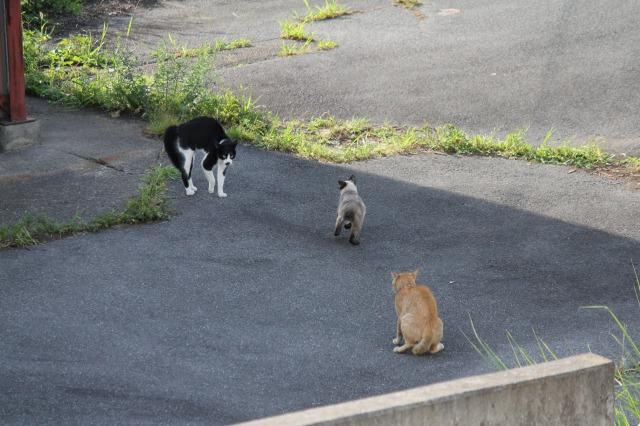 外猫観察6:三角関係