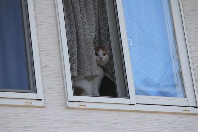 窓際こまにー