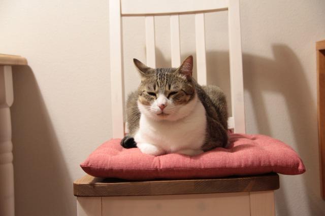 椅子と猫1