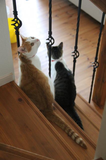 猫後ろ姿2