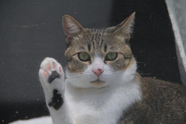散歩待ち猫2