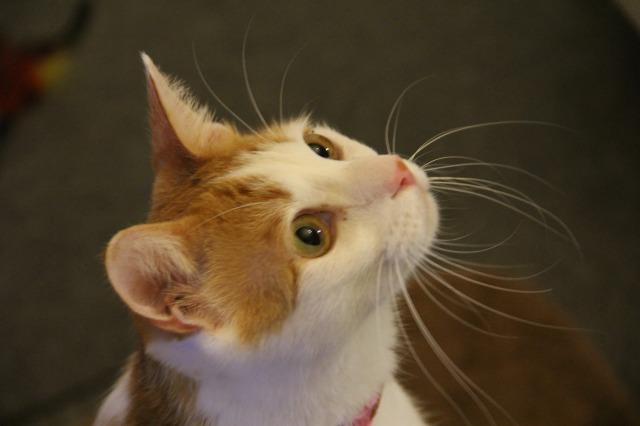 目が点猫2