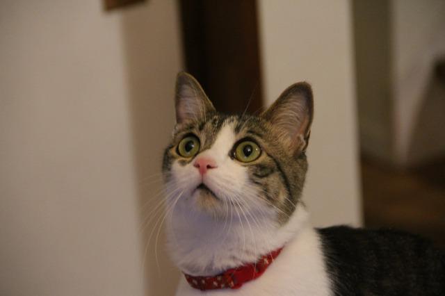 目が点猫3