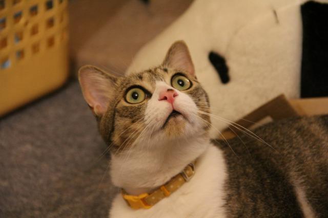 目が点猫1