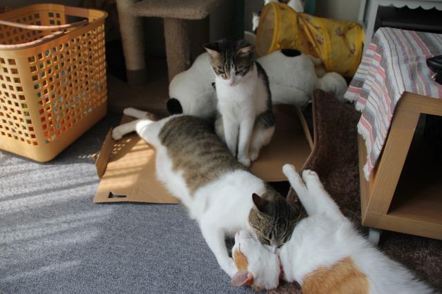 3匹の猫4