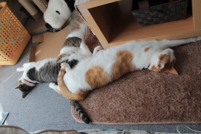 猫が3匹2