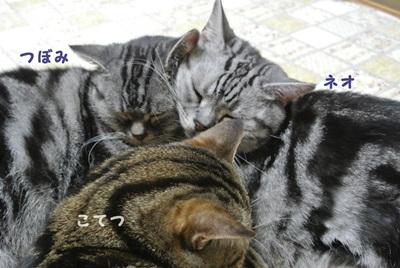 そろそろ猫団子時期