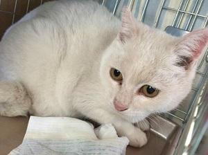 白猫(飯館村)