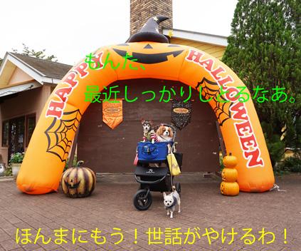 20161024 (4)