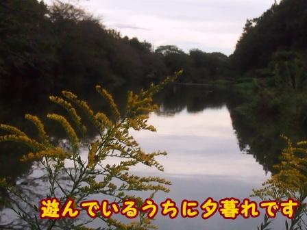 PA098783a.jpg