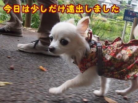 blog8309a.jpg