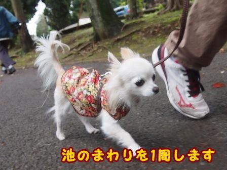 blog8310a.jpg