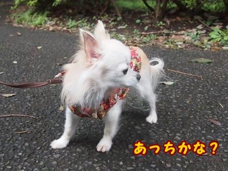 blog8314a.jpg