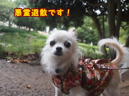 blog8317a.jpg