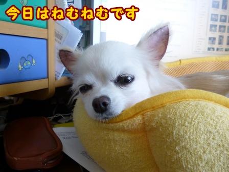 blog8398a.jpg