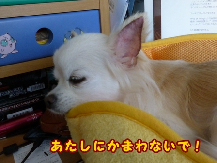 blog8399a.jpg