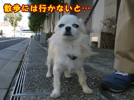 blog8401a.jpg