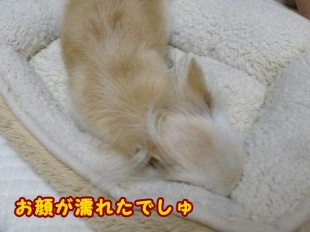 blog8436a.jpg