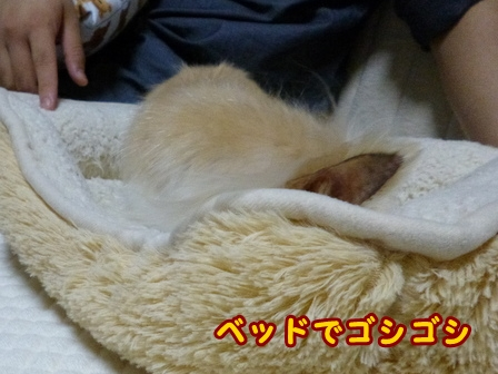 blog8437a.jpg