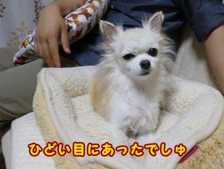blog8442a.jpg