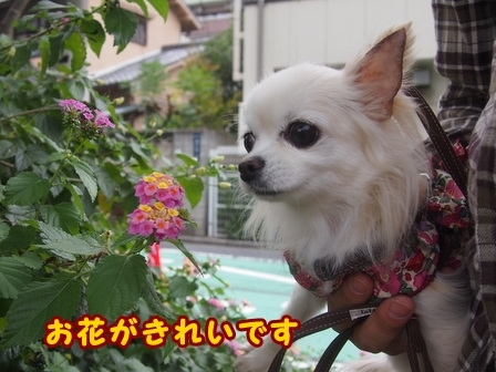 blog8454a.jpg