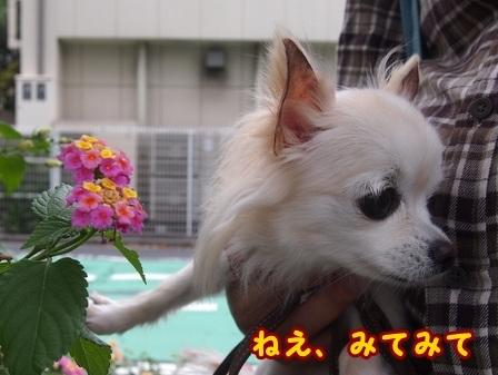 blog8455a.jpg