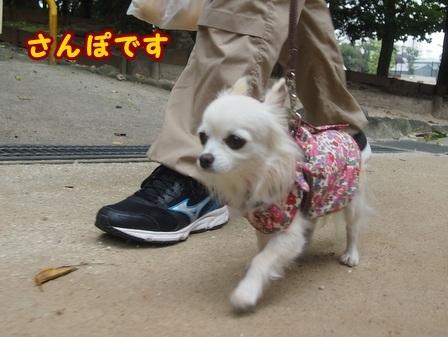 blog8461a.jpg