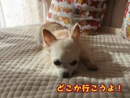 blog8464a.jpg